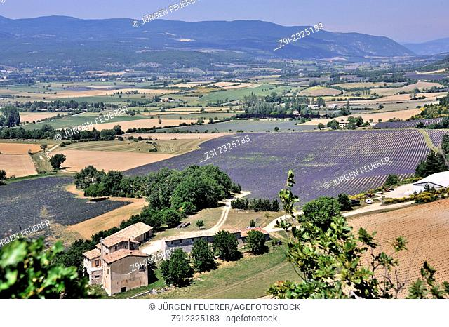 Landscape with fields of lavender near Sault, Vaucluse, Provence, France