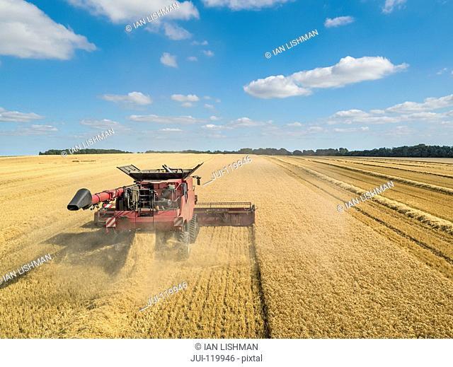 Harvest aerial of combine harvester cutting summer barley field crop under blue sky on farm