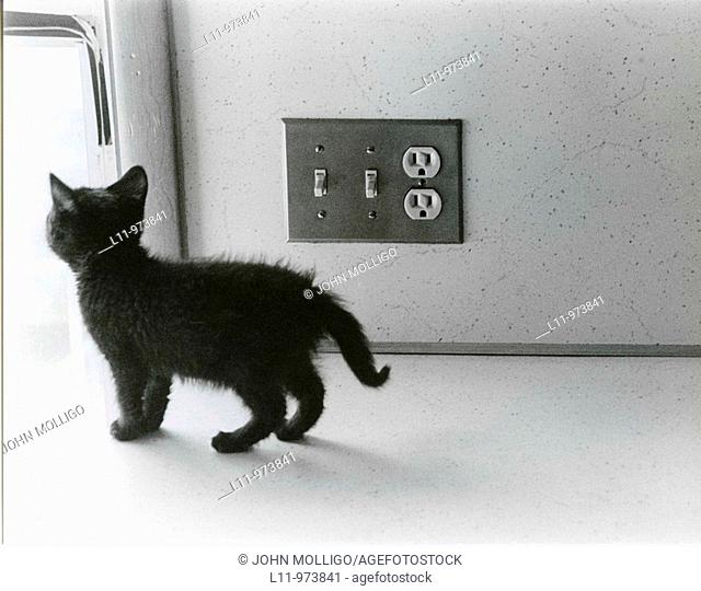 Black kitten on kitchen counter, next to light switch
