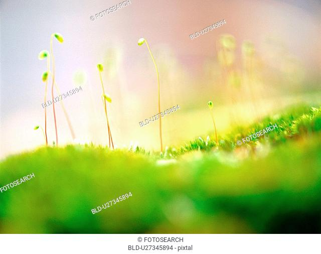 sprout, nature, spring, season, plant, film