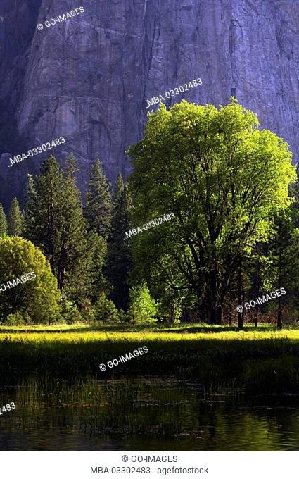 Trees and Cathedral rock, Yosemite national park, the USA