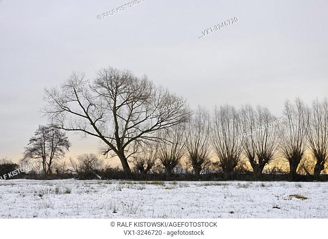Row of pollard trees next to a snow covered wet meadow, close to Duesseldorf, Ilvericher Rhine sling, Ivericher Altrheinschlinge, Strümper Bruch, Germany