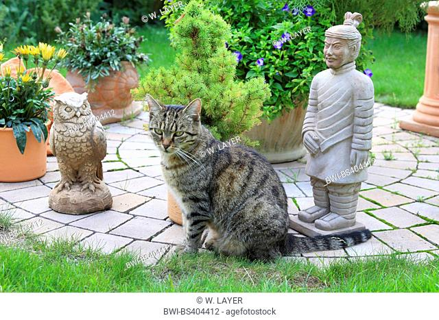 domestic cat, house cat (Felis silvestris f. catus), sits in front of garden decoration, Germany