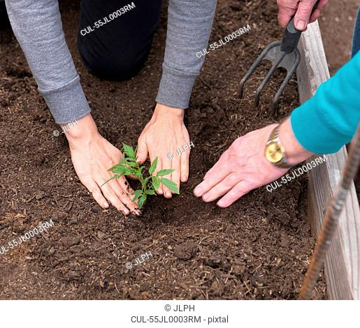 Woman and senior father planting in garden, close up