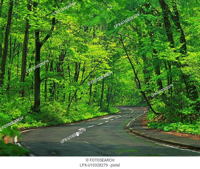 a Country Road, Surrounded By a Bunch of Light Green-colored Trees, Aomori Prefecture, Japan