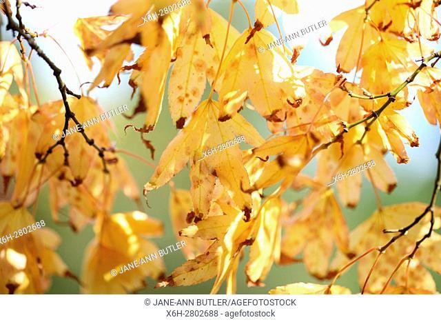 autumn gold leaves - regeneration