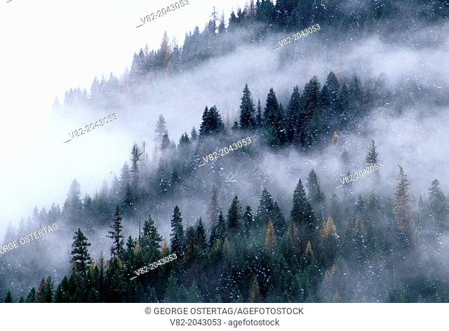 Forest slope in fog, Clearwater National Forest, Northwest Passage Scenic Byway, Idaho