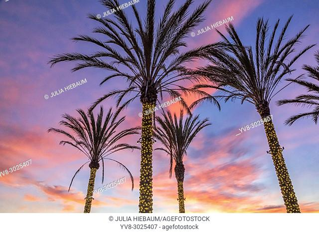 Sunset view with lighted palm trees in La Jolla, California