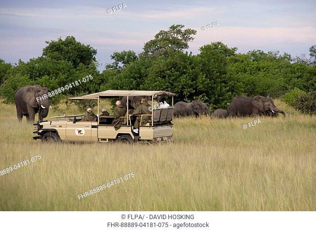 tourist watching elephant group near savuti safari lodge, botswana, africa