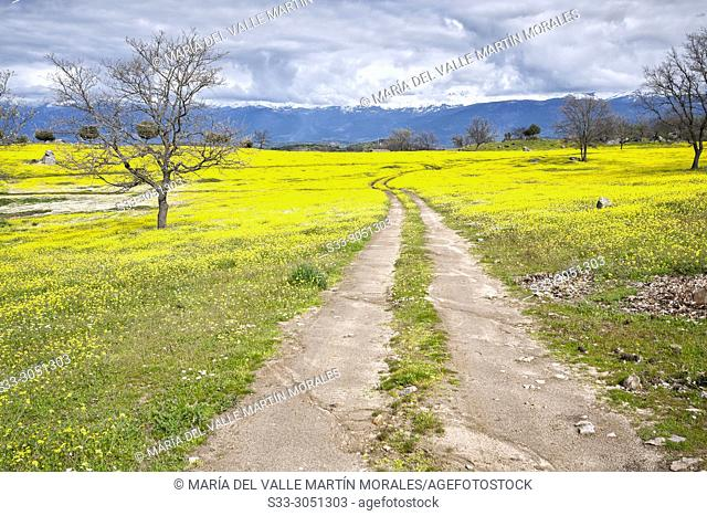 Road betwwen the meadows at Higueras de las Dueñas and snow on the Sierra de Gredos on the background. Avila. Spain