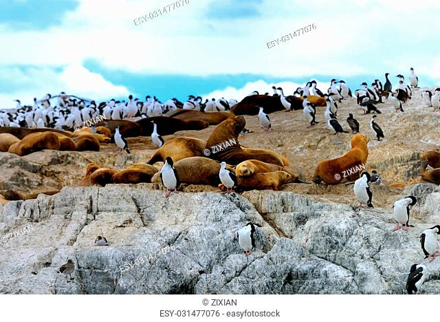Elephant seals and King Cormorants are stay in the same island
