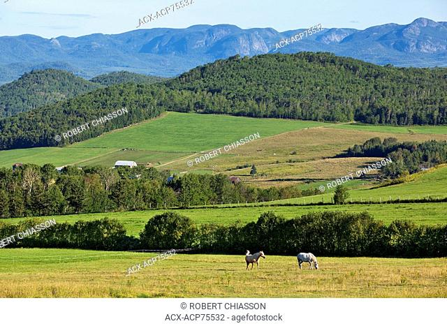 Two horses in one of several pastures and hay fields against a background of mountains in the Charlevoix backcountry, Quebec, Canada