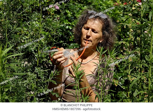 France, Paris, Museum National d'Histoire Naturelle, Christine Rollard, teacher-researcher arachnologist using a mouth aspirator to capture small spiders