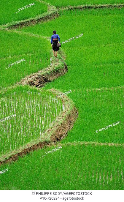 White Tay ethnic tribe in rice field, Ban Ko Muong, Hoa Binh province, Vietnam