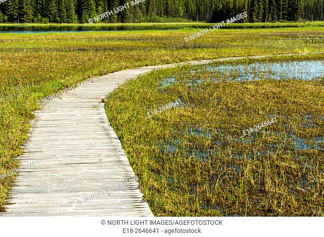 Canada, BC, Smithers. Boardwalk on Old Pines Trail through marshy area of Beaver Pelt Lake in the Silverthorn Recreation Site. Located in central BC