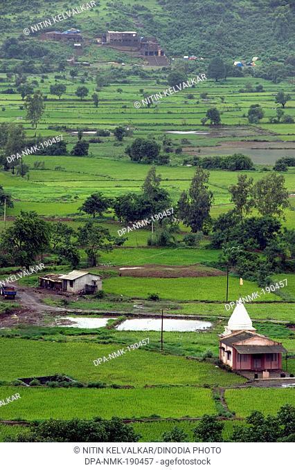 Temple in paddy fields malavli pune Maharashtra India Asia