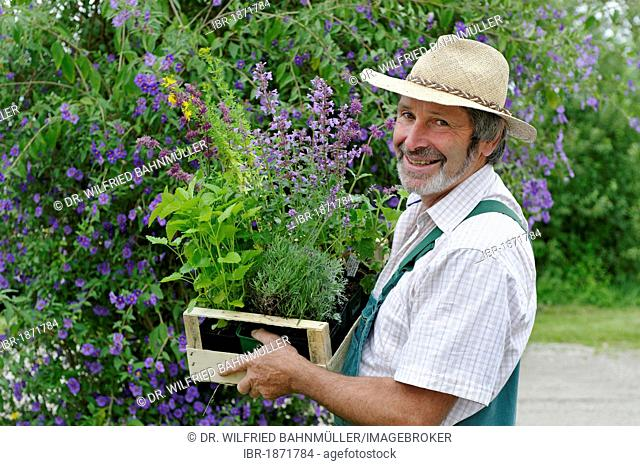 Gardener with straw hat and a box of herbal plants