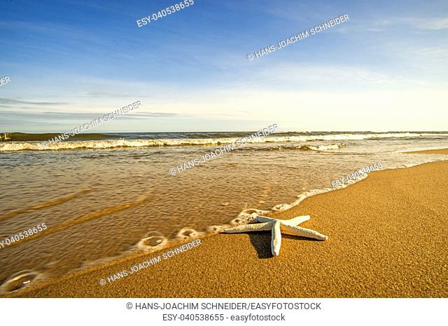 Sea star on a beach with surf in Poland