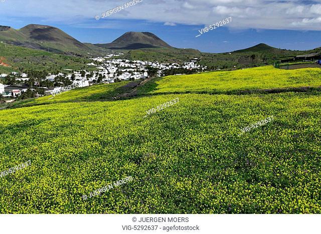 10.02.2015, Spain, ESP, Canary Islands, Lanzarote, Famara, colorful Spring Flower Fields near Haria. - Haria Lanzarot, Spain, 10/02/2015