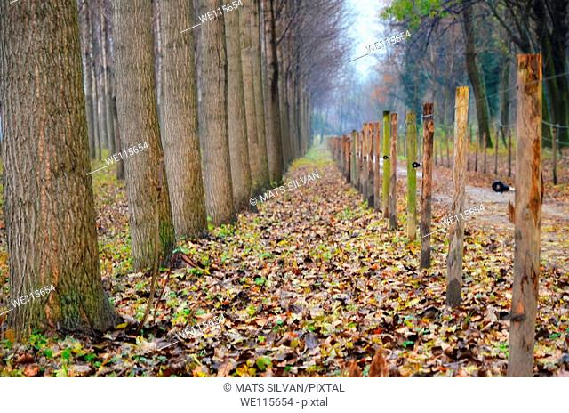 Trees and fence in autumn with leaves