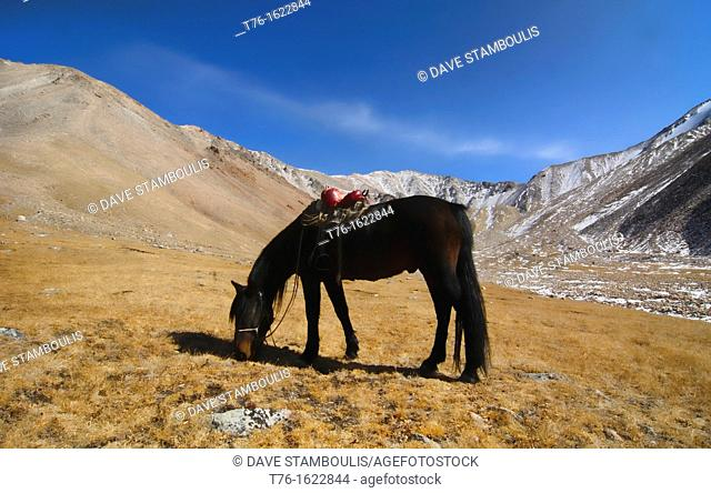 horse grazing in the beautiful landscape of the Altai Region of Bayan-Ölgii in Western Mongolia