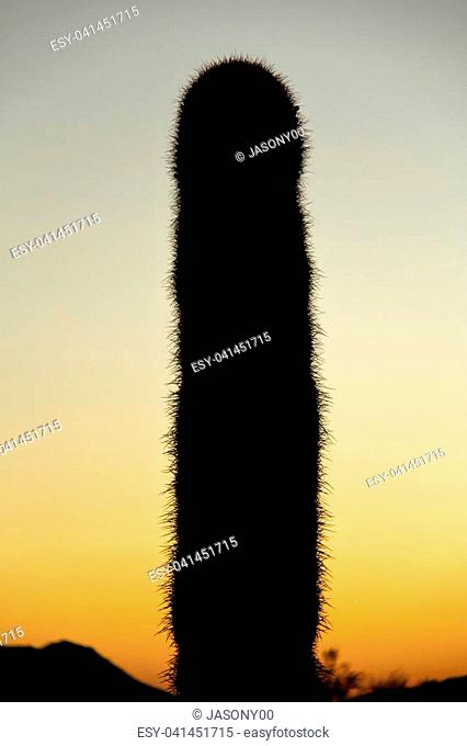 Silhouette of a Saguaro with the Sky as Copy Space