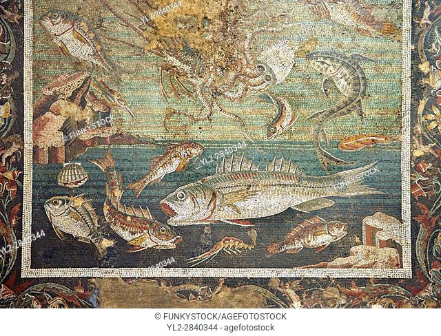 Roman mosaic of Pompeii, Casa del Fauno )VI, 12, 2), inv 9997 Naples Archaeological Musum, Italy