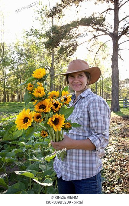 Young woman holding bunch of sunflowers (helianthus) from flower farm field