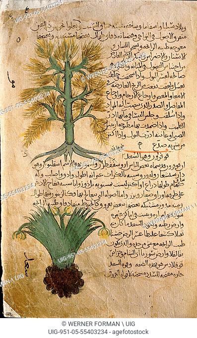 Folio 5r of the Arabic version of Dioscorides De Materia Medica