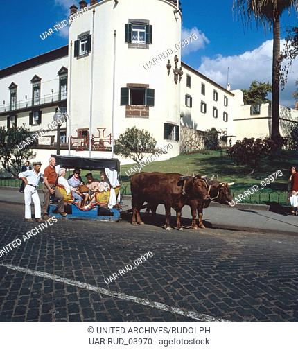 Eine Fahrt mit dem traditionellen Ochsenschlitten durch Funchal, Madeira, Portugal 1980. A tride with the traditional ox-pulled sleigh through the city of...