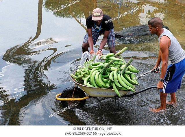 Two farmers with a load of bananas with cross of a mountain brook with Choroni in the Caribbean in Venezuela in South America