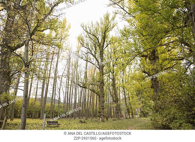 Autumn landscape with yellow leaves Gudar mountains Teruel Aragon Spain