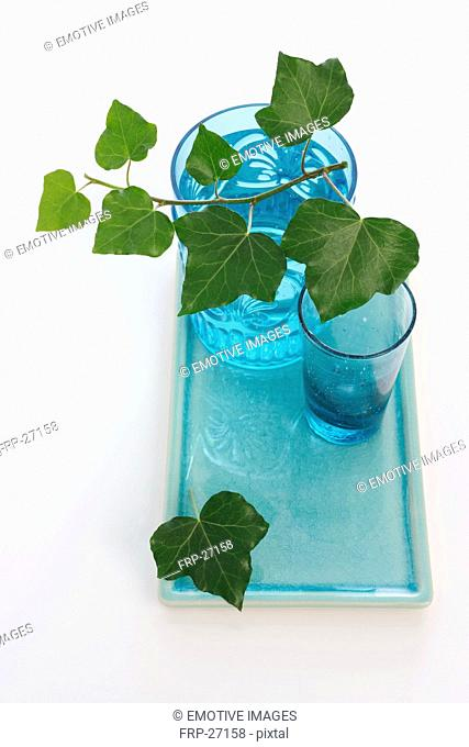 Ivy and glasses of water on tray