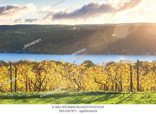 USA, New York, Finger Lakes Region, Hammondsport, Keuka Lake vineyard, autumn