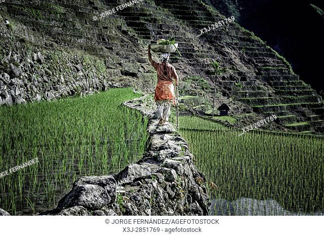 Woman walking along the rice terraces with a load on her head