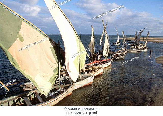 Line of Dhows on the Indian Ocean  Inhambane Bay, Mozambique