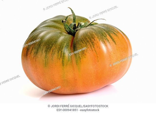 Raf Tomato, a variety of tomato from Almería, Spain