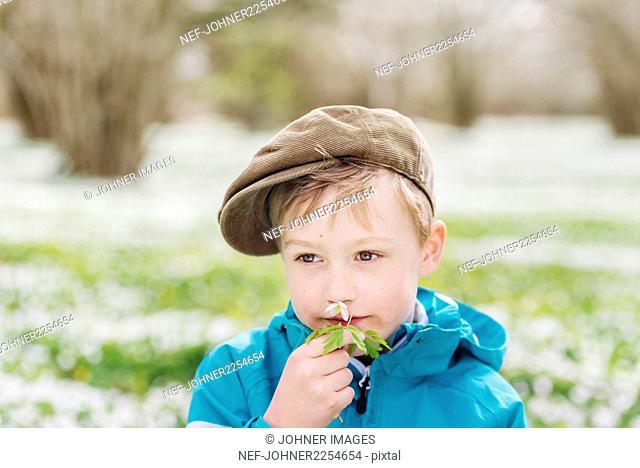 Boy smelling anemone