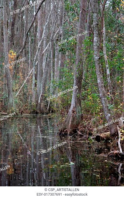 Swamp with trees and bushes