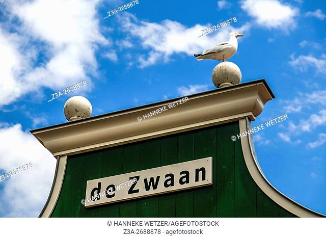 Seagul on top of a house called 'the Swan', Zaandam, the Netherlands