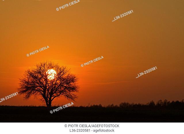 Sunset. Podlasie region. Poland