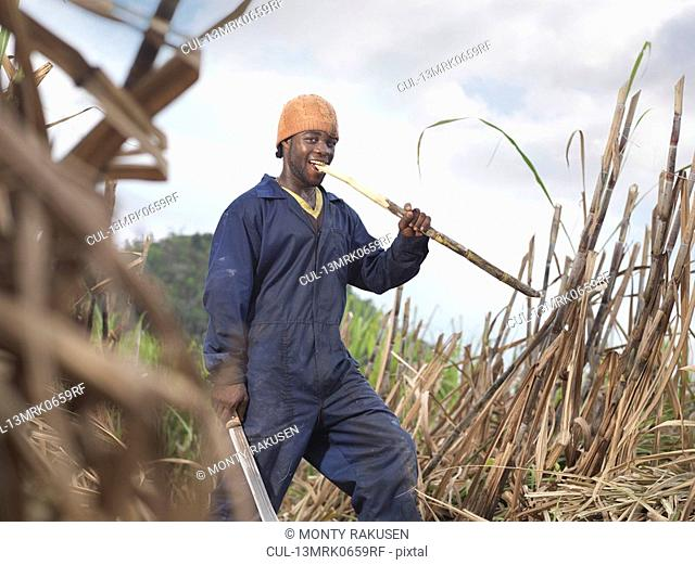 Worker Eating Sugar Cane