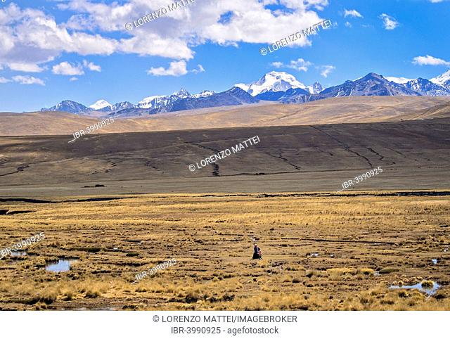 Woman alone walking in the plateau with the Cordillera Real on the back, Bolivian plateau Altiplano, Bolivia