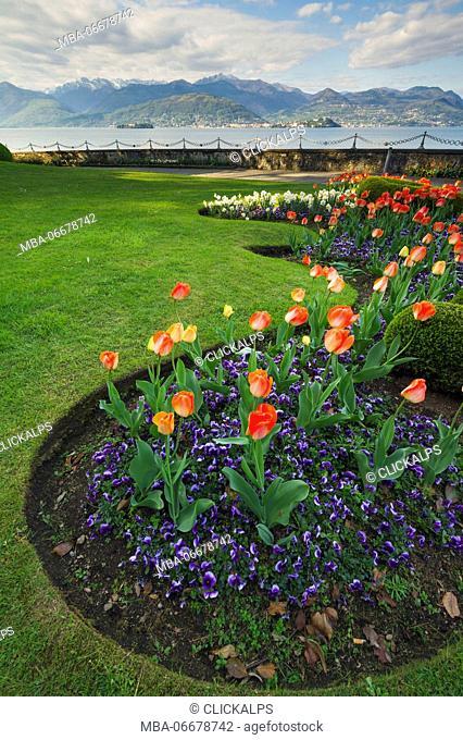 Villa Pallavicino, Stresa, Lake Maggiore, Piedmont, Italy. Tulips in bloom in garden on the lake front