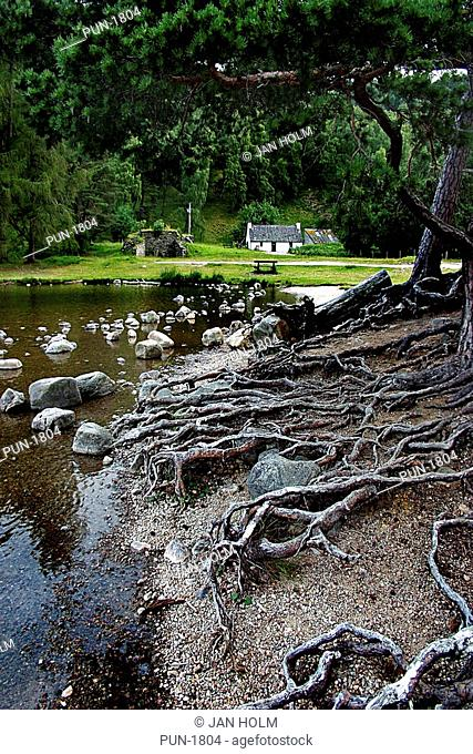 Exposed roots and bothy on Loch an Eilean