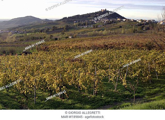italy, lombardia, oltrepò pavese, montalto pavese, vineyards