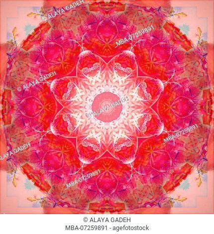 Photographic flower mandala, red