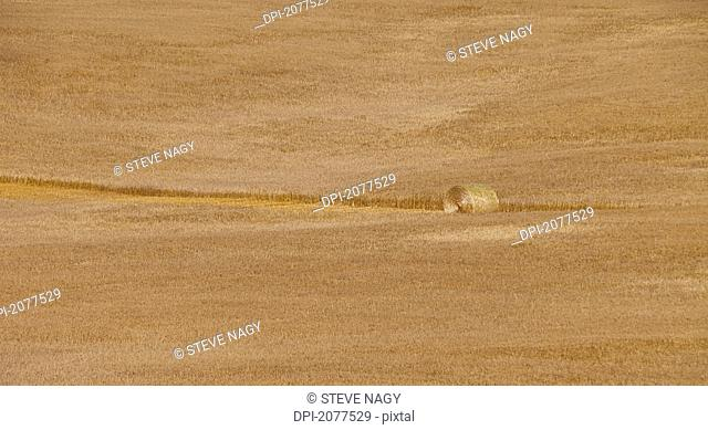 A field of grain with a hay bale in a cut row, wetaskiwin county alberta canada