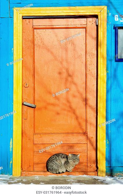 Furry cat near bright painted door in winter with space