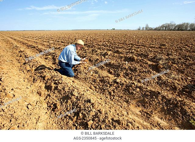 Agriculture - A farmer (grower) examines bedded ground that will be planted to cotton in the coming months / near England, Arkansas, USA